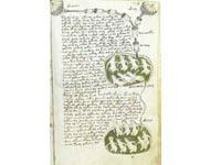 Рукопись Войнича - книга на неизвестном языке