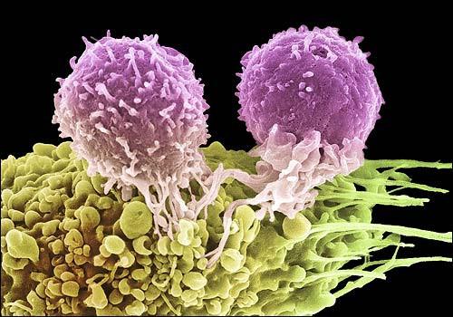 Заговор от рака