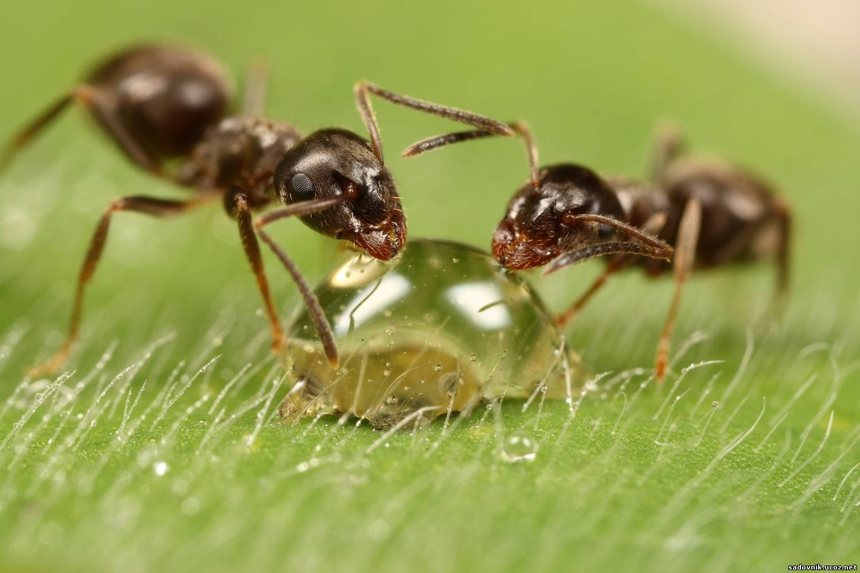 Заговор от муравьев