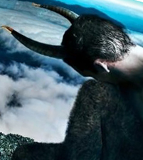 Козерог в год козы – мужчина