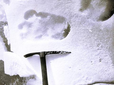 Учёные нашли снежного человека в Кемеровской области