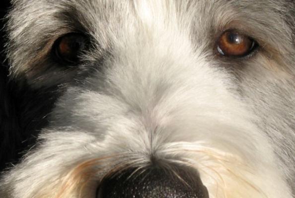 Собаки с экстрасенсорными способностями