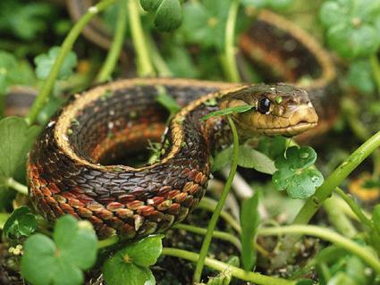 Если вам приснилась змея