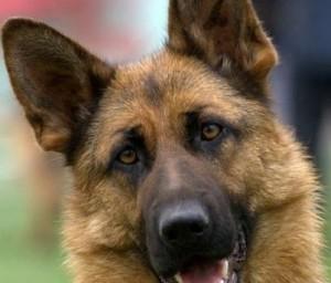 dog-aa[1]