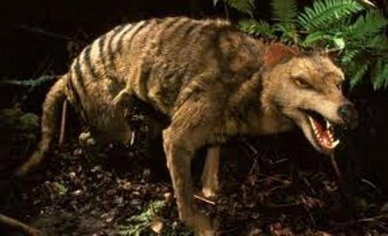 самый крупный волк фото в мире